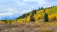 September foliage, Jackson Hole, Grand Teton National Park