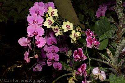Orchid Show, New York Botanical Garden, April 2018